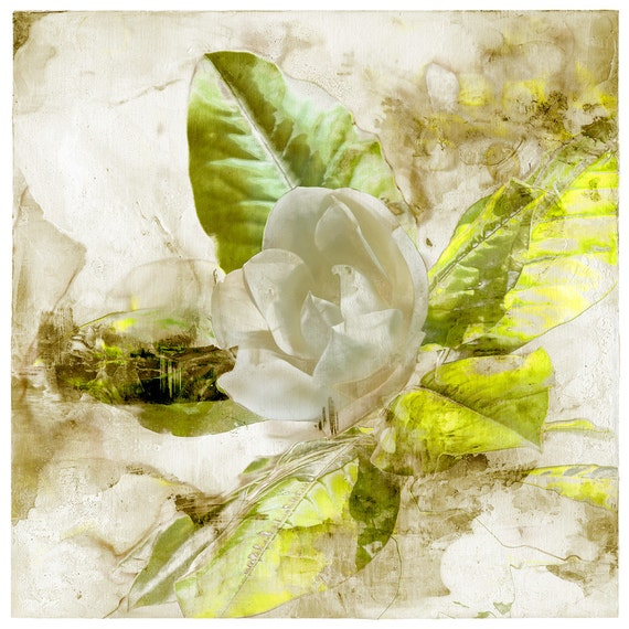 Magnolia Eva, botanical print, flower art, limited edition, fine art print, affordable art, green, modern art, contemporary print,wall decor