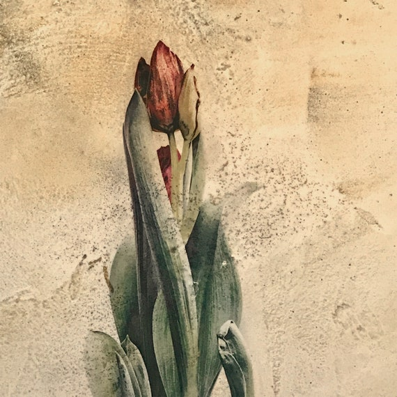 Spring Tulip on Venetian Plaster, mixed media botanical art for the home