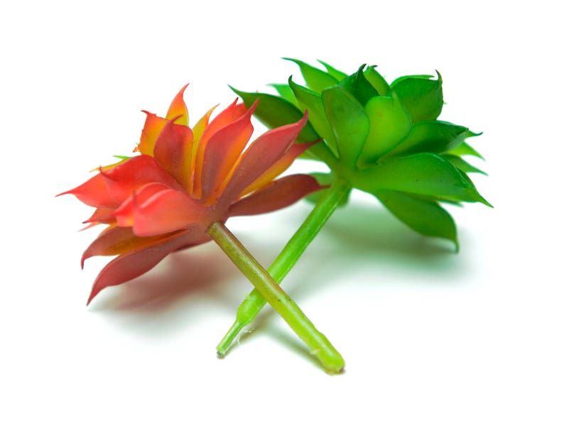Faux Succulent Lotus Flower Etsy