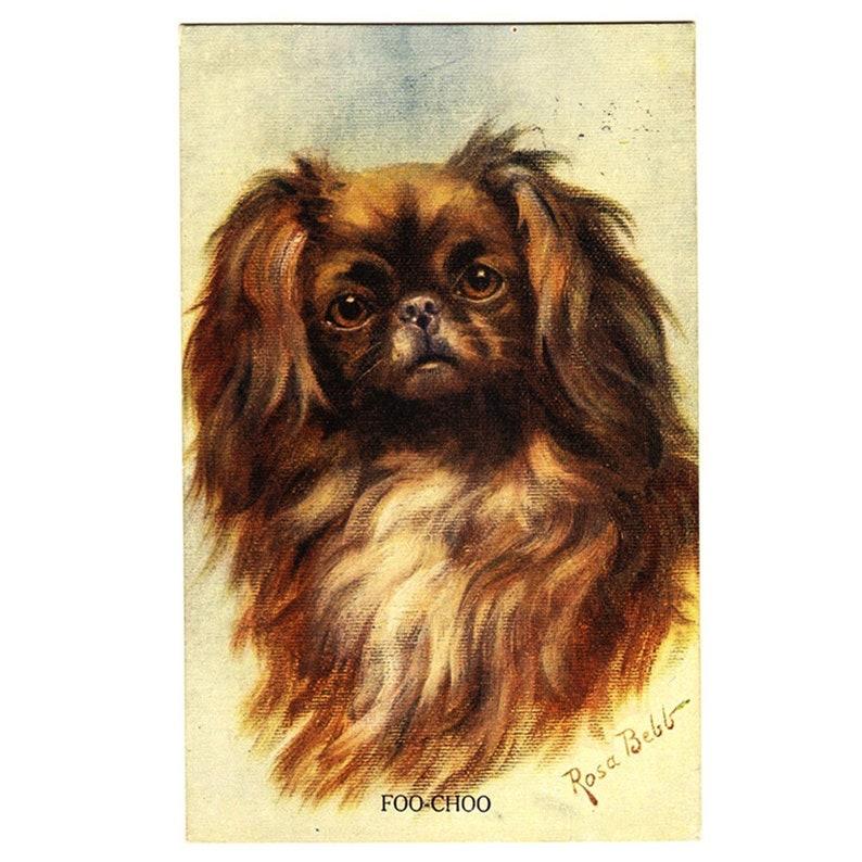 Vintage 1910s Postcard Rosa Bebb 'Foo-Choo' Pekingese Puppy Lion Dog Peke  Japanese Chin Shih Tzu Antique Edwardian Greeting Card Gift