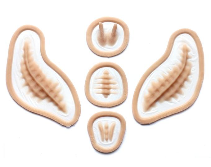 Seahorse / Facial Scales / Silicone prosthetics / Latex free