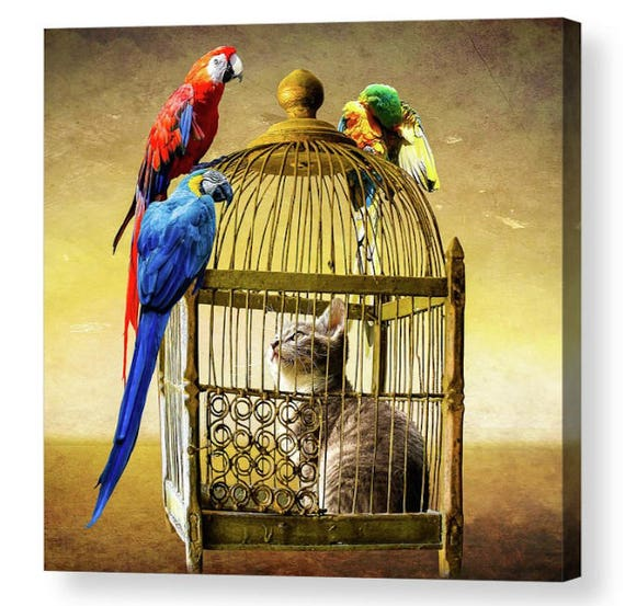 Cat In A Bird Cage Photo Canvas Art Repro 8x8 Etsy