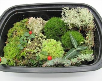 Live Moss Assortment Variety Lot of Moss,Lichen and Woodland Plants-DIY-Terrarium, Vivarium, Fairy Garden,Shade Garden, Crafts FREE SHIPPING