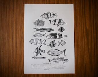 Australian fish Lino print: Fishes of the Fleurieu Coast