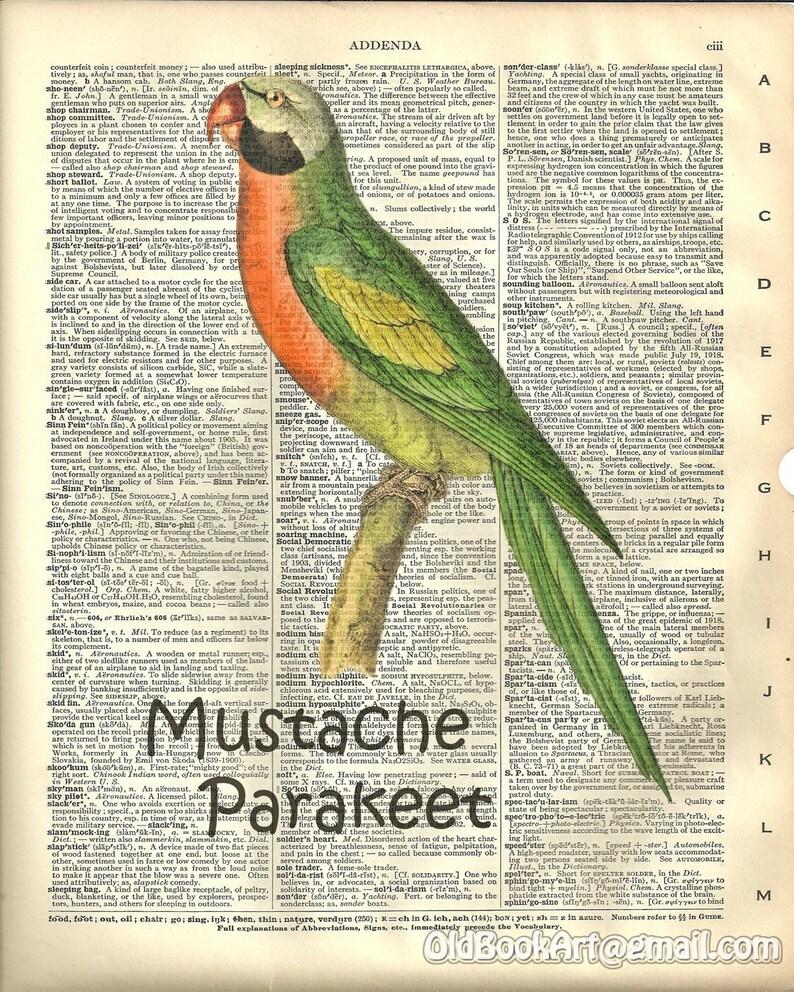 Mustache Parakeet Bird Art Kitchen Decor Dictionary Art  | Etsy