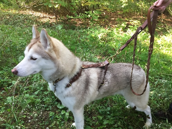 Matching Braided Leather Dog Harness And Dual-Handle Leash Set