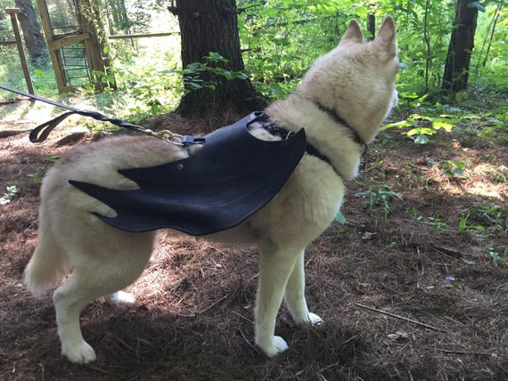 Bat Dog-Wings with Free Harness