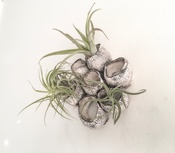 Porcelain Wall Air Plant Holder