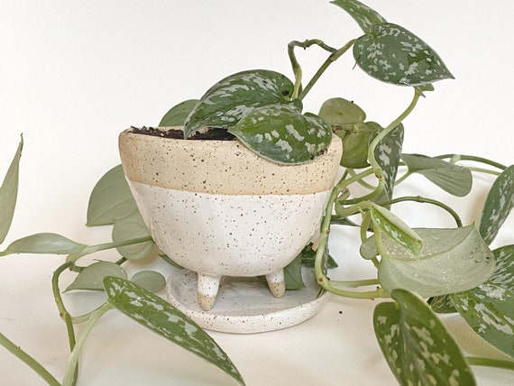Perfect Planter with Drainage and Saucer