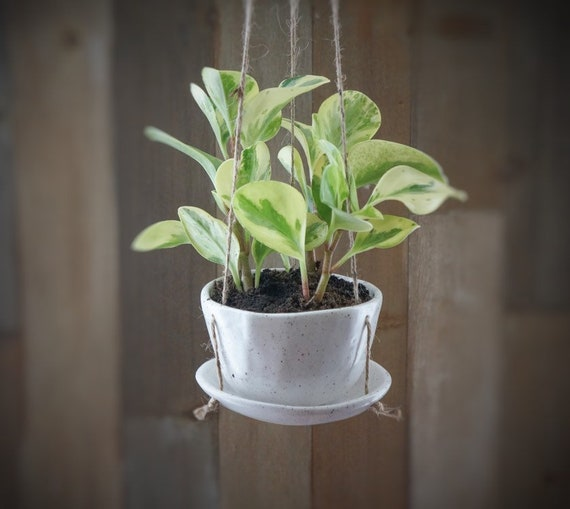 Hanging Planter with Drainage holes and Saucer