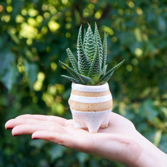 Mini Succulent Planter or Air Planter and perfect plant lovers gift