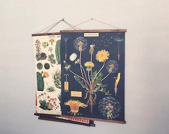 Dandelion vintage poster botanical school chart