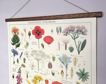 Wildflowers specimens poster vintage poster botanical school chart