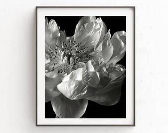 Black and White Peony Art Print, Dark Floral Art Print, Dark Flowers Art, Moody Art Print, Moody Floral Wall Art, Wall Art Print,Modern Art
