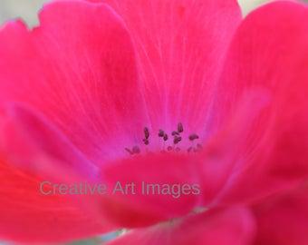 Pink Rose, Pink Rose Canvas Print, Pink Rose Photograph, Pink Rose Image #100