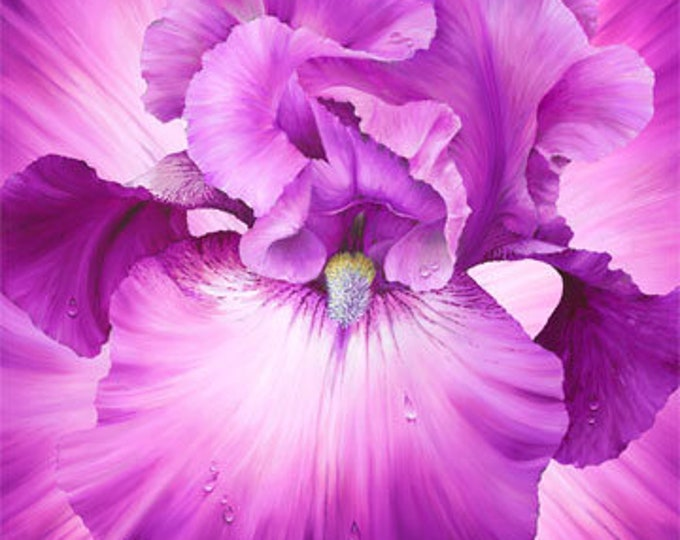 """Northcott - Lush - Supersize Iris - Oversized Panel - Magenta/Pink - DP24191-28- 43""""x43"""" Panel - Sold by the Panel"""