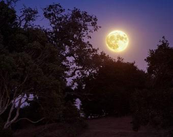 Harvest Moonrise - Photographic Print on Archival Paper. Moon. Photography. Night. Home Decor. Fine Art.