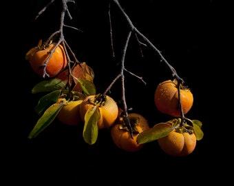 Persimmons - Archival Photographic Print.  Still life. Fruit. Autumn. Decor. Home. Kitchen. Art.
