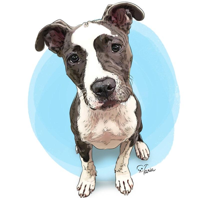 e651b50591 Pitbull watercolor Pet portrait Staffordshire bull terrier | Etsy