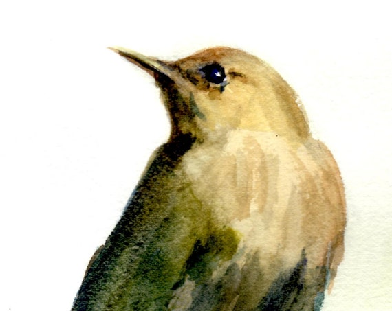 a signed print of a house wren - House Wren 2 - from a watercolor painting by Bonnie White