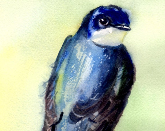 tree swallow signed print of a songbird by bonnie white watercolor artist