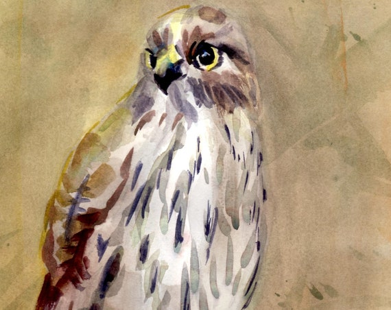 Sharp-shinned Hawk original watercolor by Bonnie White Columbia Gorge Artist