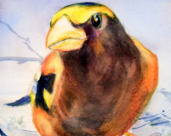 Evening Grosbeak 2 signed songbird print by Bonnie White watercolor artist