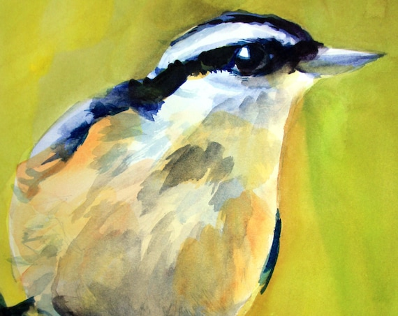 red-breasted nuthatch signed print of a watercolor by bonnie white watercolor artist