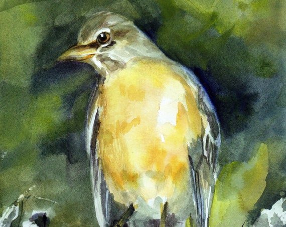 Robin signed print of a songbird by bonnie white watercolor artist
