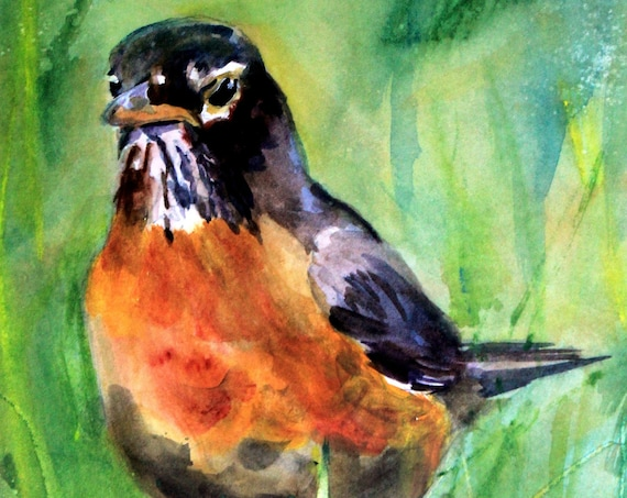 American Robin signed print of a watercolor by Bonnie White watercolor artist