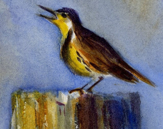 western meadowlark signed songbird print by watercolor artist Bonnie White