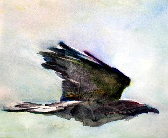 Raven in flight is a signed print of a raven made from a watercolor done by Bonnie White