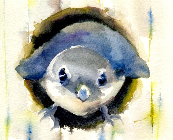 a signed print of a western bluebird looking out of his nest box of a watercolor by Bonnie White