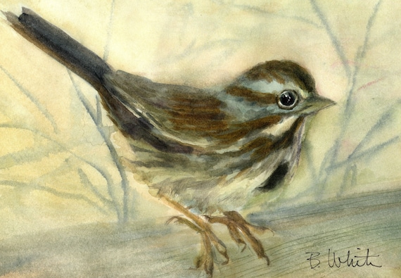 Song Sparrow original watercolor by Bonnie White - 6.75 x 10 inches - if matted should frame to 11x14 or larger