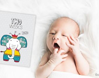 PRINTABLE Baby Milestone Animal Cards | Instant Digital Download | Original Doodle Design
