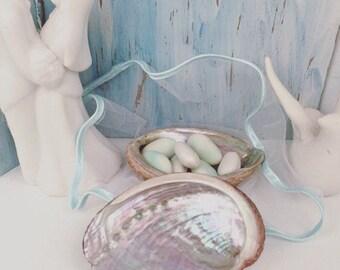 Set of 20 custom abalone shells