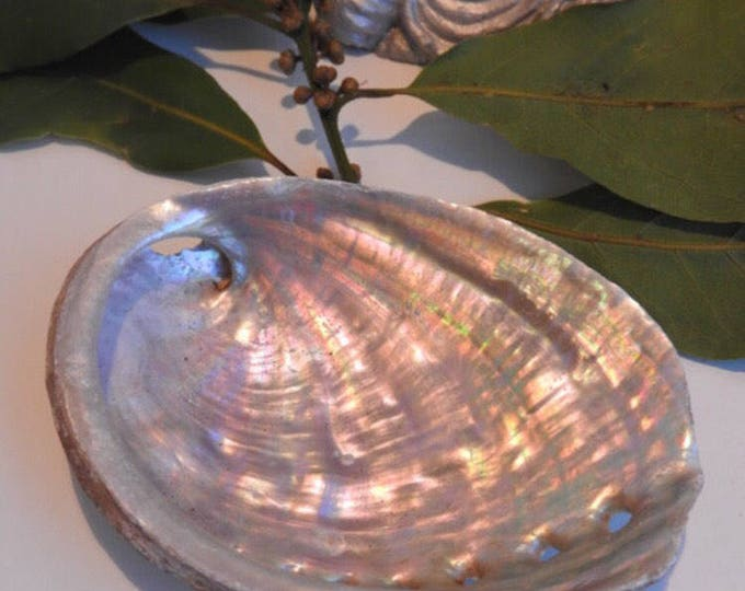 Featured listing image: Natural abalone shell - for fumigating rituals - smudging tray - jewelery cup - rings - shamanism - paganism - wiccan - white magic witch
