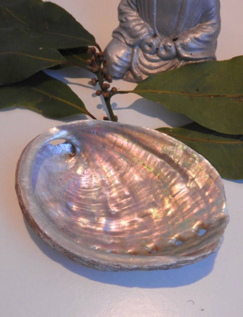 Natural abalone shell  for fumigating rituals  smudging tray image 0