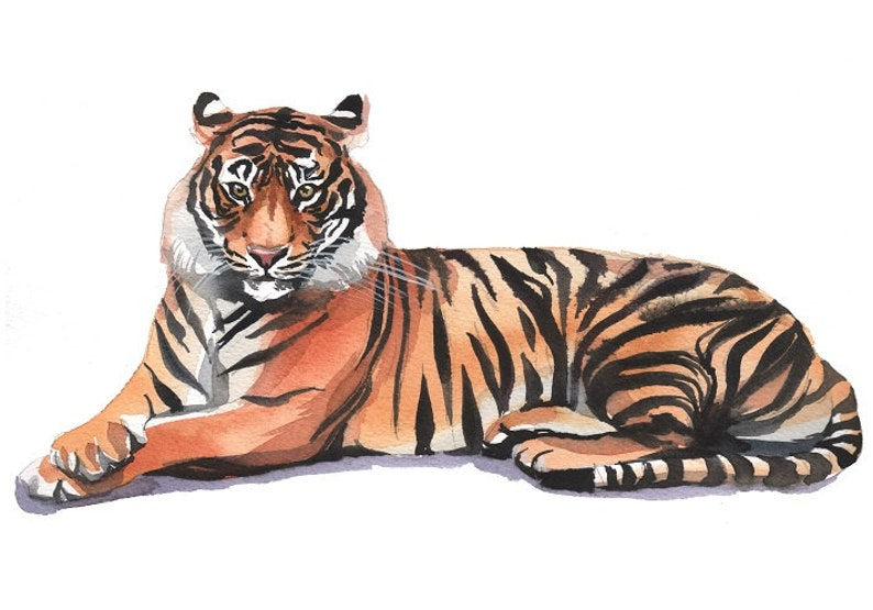 Tiger Safari Nursery Decor Clipart  Hand Painted Watercolor Digital Print Files Clip Art Instant Download Images Pictures Art Commercial Use