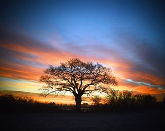 Sunrise over my favorite tree, sunrise, Landscape, Nature, tree, tree silouette
