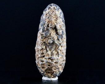 Fossil Pine Cone Araucaria Mirabilis 6.57 ct Octagon Cut 13 x 10.20 x 7.5mm y100919 Brown Gemstone Loose Faceted Gem Stone