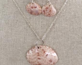 Calico Clam Seashell Set