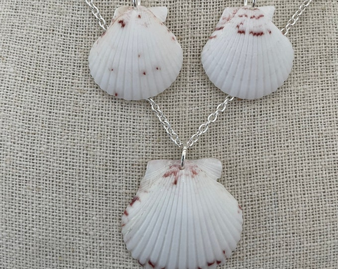 White Scallop Shell Set
