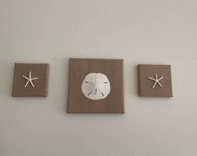 Real Starfish & Sand Dollar Wall Set