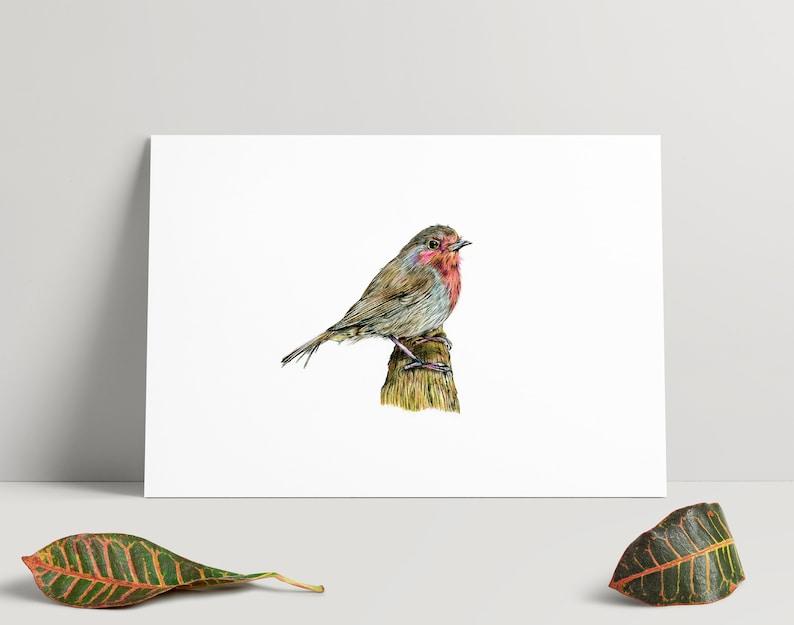 A4 Print Hand drawn illustration of a robin