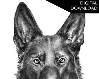 German Shepard Dog: Handmade Art Pencil Drawing (Rambo) Digital Download