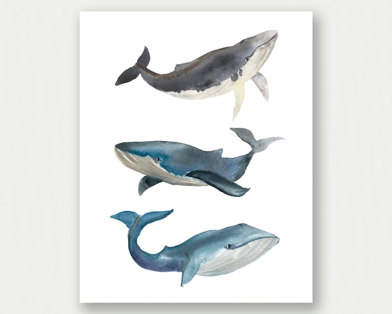 photo regarding Whale Printable titled Whale Portray, Watercolor Whale Wall Artwork, Whale Printable, Watercolor Print, Blue Nursery Decor, Whales Nursery Artwork, Whale Nursery Decor