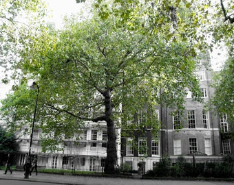 LONDON PHOTOGRAPHY - London Green