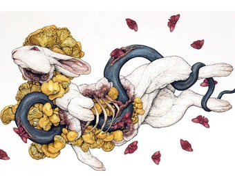 The Contemplation of Lepus: Limited Edition Print