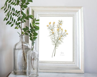 Gorse Botanical Watercolour Art Print